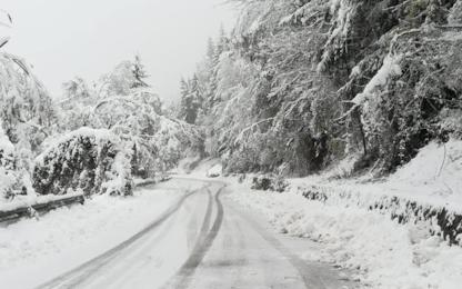 Meteo, neve in Alto Adige: in 15mila senza corrente. FOTO