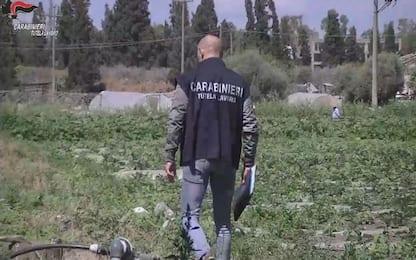 Caporalato, arrestati due soci di un'azienda agricola del Catanese