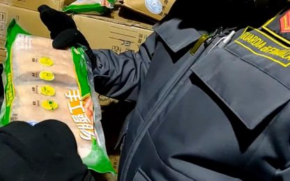Peste suina, sequestrate e incenerite 10 tonnellate di carne cinese