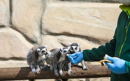 Coronavirus, a rischio chiusura lo zoo di Pombia. FOTO