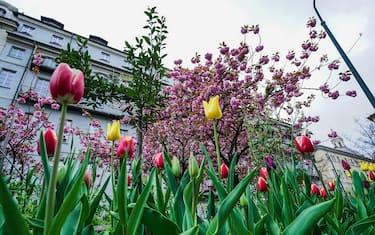 foto-hero-tulipani-torino-ansa