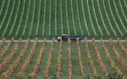 Agricoltura, Istat: produzione in calo dell'1,3% nel 2019
