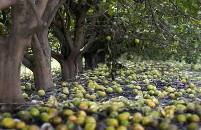 Troppo caldo, agricoltura in tilt: in anticipo mimose, mandorle, pesche