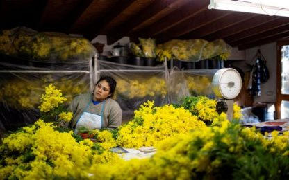 Lavoro, Censis-Confcooperative: entro 2023 ogni 5 posti uno è 'green'