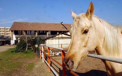 Grecia, vietata la macellazione dei cavalli