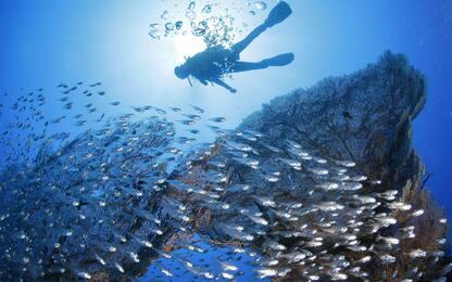 Giornata mondiale degli oceani, cos'è e perché si celebra
