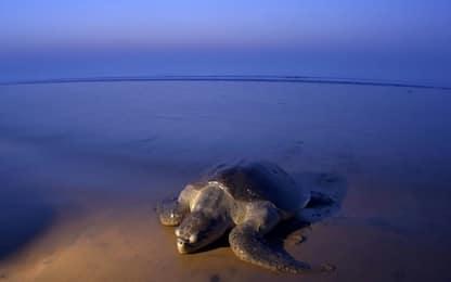 Giornata mondiale delle tartarughe: quando e perché è stata istituita