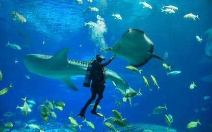 Chimelong Ocean Kingdom acquario