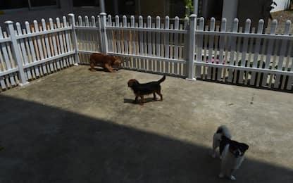A Taiwan sarà vietato mangiare carne di gatto e cane<br>