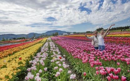 Canada, il festival dei tulipani