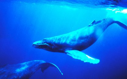 Blue Whale Game, di cosa si tratta