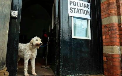 #DogsAtPollingStations: anche i cani al seggio durante le elezioni Uk