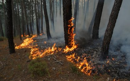 Portogallo, polemiche dopo l'incendio. Il premier ordina un'inchiesta