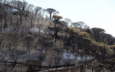 GettyImages-Incendio_Francia3