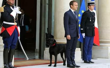 Francia: all'Eliseo arriva Nemo, il nuovo cane della coppia Macron