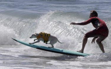 00_surf_cani_ansa