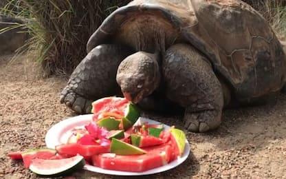 Diego, la tartaruga gigante che ha salvato la specie va in pensione