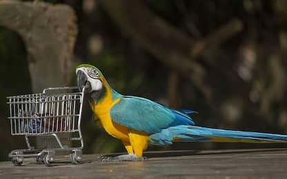 Pet therapy con i pappagalli, per stimolare l'attenzione degli anziani