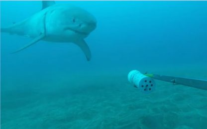 """Nuova Zelanda, lo squalo bianco """"assaggia"""" la telecamera. VIDEO"""