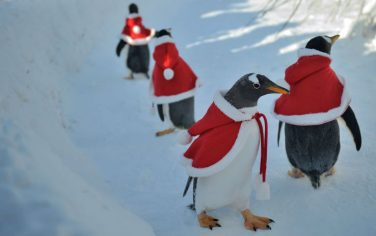 GettyImages_Pinguini_Natale_Cina_4