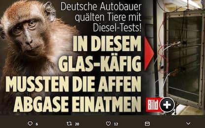 Scimmie usate come cavie per testare gas scarico delle auto: polemica