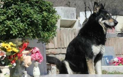 Muore il cane che per 11 anni ha vegliato sulla tomba del padrone