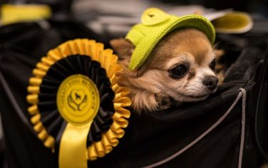 GettyImages_cani_crufts_dog_show_1