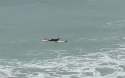 Florida, il surfista salva la vita a un uccello nell'oceano. VIDEO
