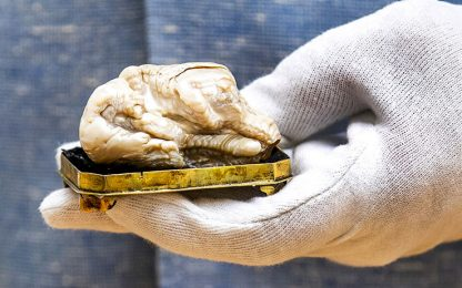 L'Aia, venduta all'asta la perla d'acqua dolce più grande del mondo