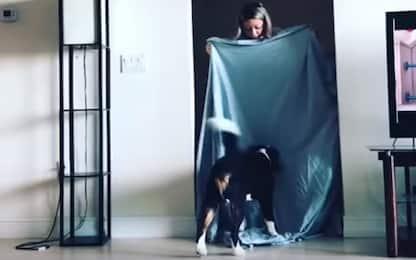 """""""What the fluff challenge"""", cani e lenzuola per la sfida social. VIDEO"""