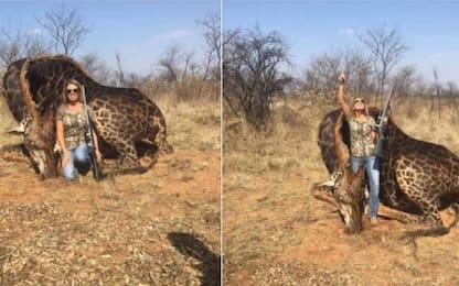 Uccide rara giraffa e pubblica foto: insulti a cacciatrice Usa