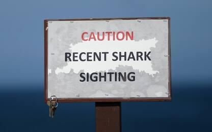 Cape Cod, squalo attacca e uccide un 26enne