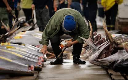 Palermo, pesce sequestrato e multe al porticciolo di Sant'Erasmo