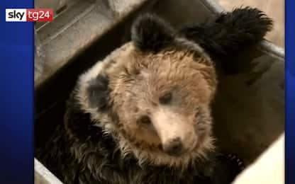 Cina, liberato orso caduto in una centrale idroelettrica: VIDEO