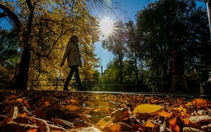 Perché le foglie cadono dagli alberi in autunno