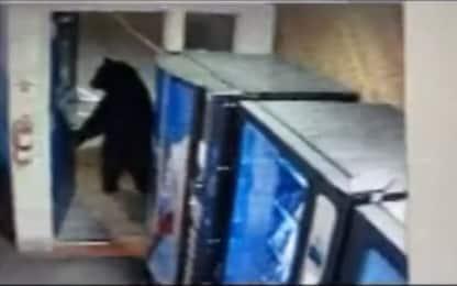 California, ospite inatteso alla stazione di polizia: è un orso. VIDEO