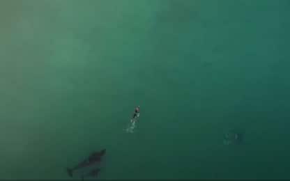 Nuova Zelanda, donna nuota a fianco di tre orche. VIDEO