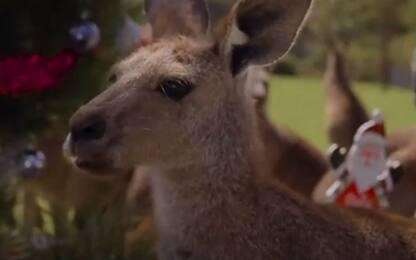 Australia, anche canguri e Koala festeggiano il Natale. VIDEO