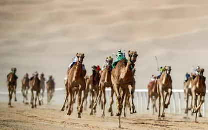 Emirati Arabi, cammelli guidati da fantini robot. FOTO