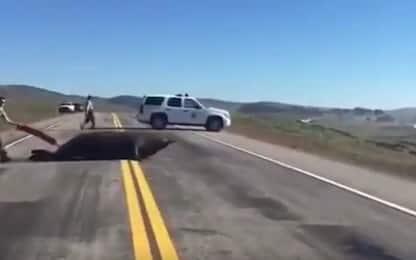 California, elefante marino in strada: polizia lo riporta nell'oceano