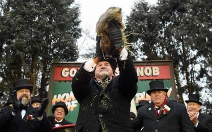 Il giorno della marmotta negli Usa. FOTO