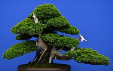 GettyImages-bonsai