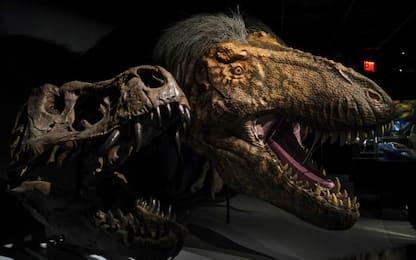 Dinosauri, ricostruite in 3D uova risalenti a 200 milioni di anni fa