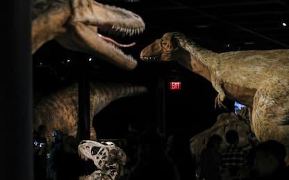 Ritrovata la coda dello spinosauro, il più grande dinosauro predatore