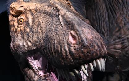 Africa, trovate impronte di dinosauri che fuggivano dalla lava
