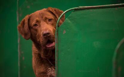 I cani si stressano quanto i loro padroni: lo dice uno studio