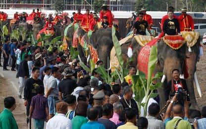Thailandia, la giornata nazionale dell'elefante