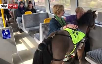 Digby, il pony in metro a Londra per accompagnare i ciechi. VIDEO
