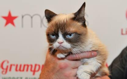 Grumpy Cat, le foto della gatta più famosa del web