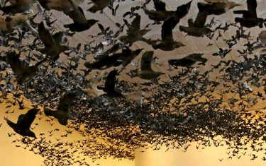 GettyImages_Murmuration_National_Gallery_of_Victoria_Copertina_1